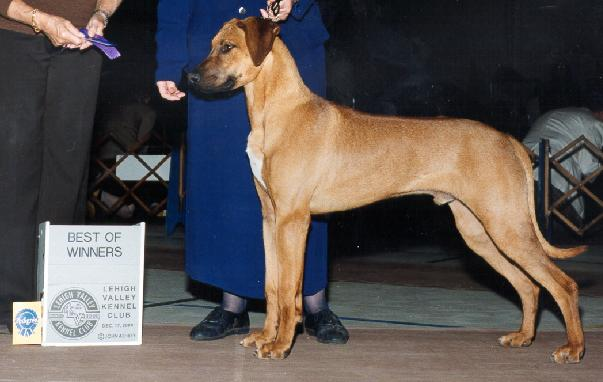 Leigh High Valley MD AKC Dog Show December 2000 shown & finished by